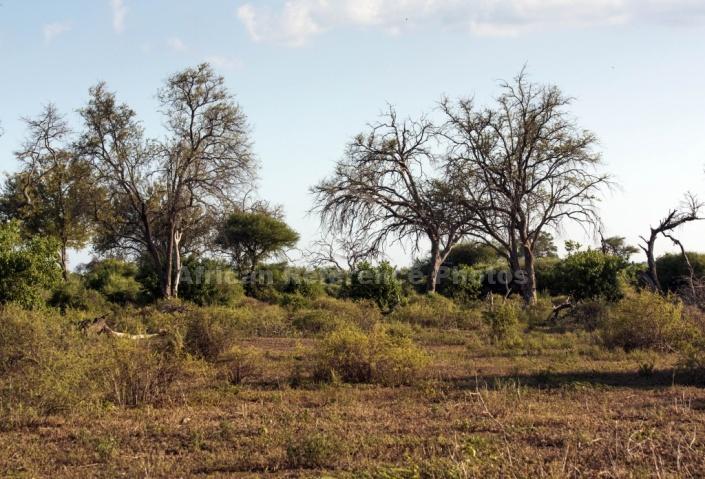 Mashatu Game Reserve Scenic