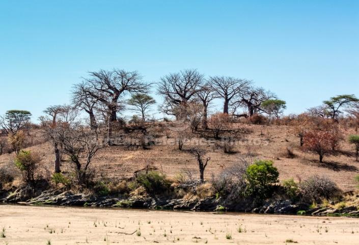 Baobab Tree Reference Image