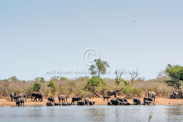 Elephant Herd at Water's Edge
