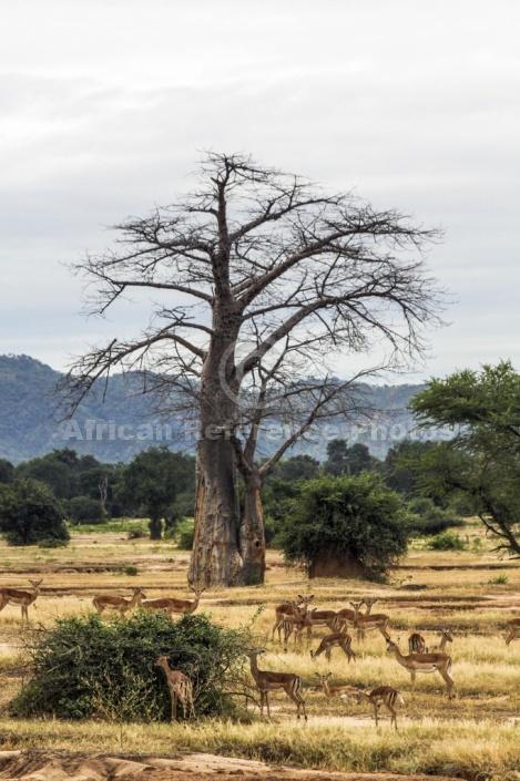 Lower Zambezi Scenic