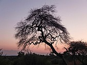 Tree at Sundown