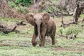 Elephant art reference image