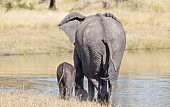 Elephant Mom and Baby