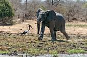 Grumpy Elephant