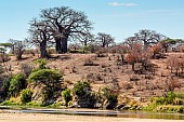 Baobab Tree Reference Image
