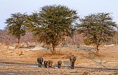 Elephant Group Drinking