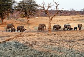 Elephant Herd at Muddy Waterhole