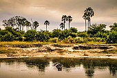 Hippo Pool, Moremi Game Reserve