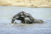 Elephant Enjoying Bath