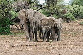 Elephant Family Group in Tight Cluster