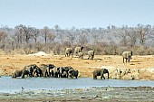 Elephant Herd Drinking, Scenic View