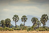 Lala Palms with Mountains