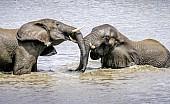 Elephants Having Fun
