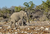 Elephant Mother and Youngster